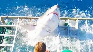 La furia de un tiburón al romper su jaula en una isla de México